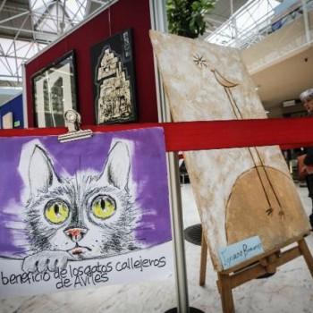 expo-gatos